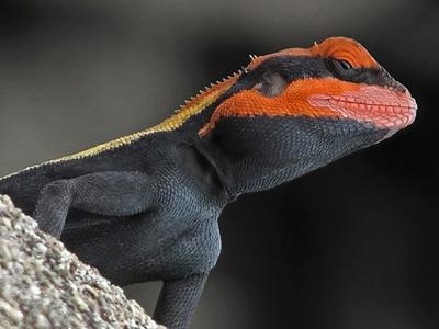 Reptiles Pets uk Pet Reptiles For Sale